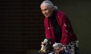 Jane Goodall Budapesten, 2018. május 17. (MTI Fotó: Szigetváry Zsolt)