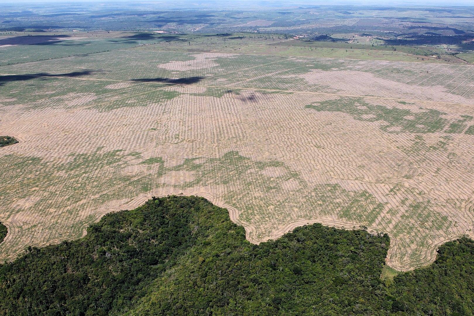 Erdőirtás Maranhao államban,